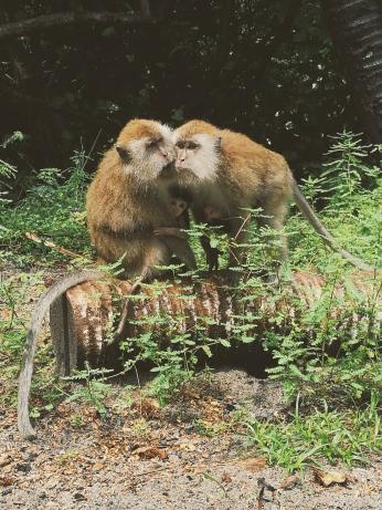 Mērkaķēni